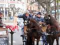 Photo n° 29315 CIAT Deauville 2013  Affichée 7 fois Ajoutée le 17/10/2013 10:16:58 par Renata  --> Cliquer pour agrandir <--