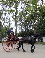 Photo n° 29343 CIAT Deauville 2013  Affichée 27 fois Ajoutée le 17/10/2013 10:17:01 par Renata  --> Cliquer pour agrandir <--