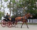 Photo n° 29346 CIAT Deauville 2013  Affichée 32 fois Ajoutée le 17/10/2013 10:17:01 par Renata  --> Cliquer pour agrandir <--