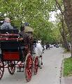 Photo n° 29350 CIAT Deauville 2013  Affichée 22 fois Ajoutée le 17/10/2013 10:17:01 par Renata  --> Cliquer pour agrandir <--