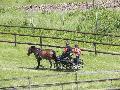 Photo n° 33296 LOUVRES 2015 Les Attelages de Conti  Affichée 13 fois Ajoutée le 30/05/2015 17:36:24 par JeanClaudeGrognet  --> Cliquer pour agrandir <--