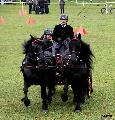 Photo n° 36723Concours de Bas En Basset 2016Concours de Bas En Basset 2016Affichée 29 foisAjoutée le 09/05/2016 16:57:46 par Patfra--> Cliquer pour agrandir <--