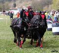 Photo n° 36732Concours de Bas En Basset 2016Affichée 17 foisAjoutée le 09/05/2016 16:57:46 par Patfra--> Cliquer pour agrandir <--