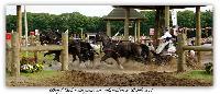 Photo n° 37976 BREDA CdM 2016 photo Heliosness  Affichée 57 fois Ajoutée le 03/09/2016 18:52:38 par JeanClaudeGrognet  --> Cliquer pour agrandir <--