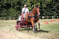 Photo n° 38001 Le Pin Champ. Normandie 2016. Photo Chevalandrieu Eric LAVILLE Affichée 8 fois Ajoutée le 05/09/2016 16:52:11 par Nadinetoudic  --> Cliquer pour agrandir <--