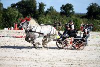Photo n° 38459 Championnat de France Percheron. Le Pin au Haras 25 septembre 2016. Photo Chevalandrieu Affichée 18 fois Ajoutée le 18/10/2016 16:56:38 par Nadinetoudic  --> Cliquer pour agrandir <--
