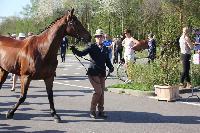 Photo n° 43776KRONENBERG  ambiance vétérinaireAnne Violaine BrisouAffichée 4 fois, 0 voteAjoutée le 19/04/2018 13:03:35 par JeanClaudeGrognet
