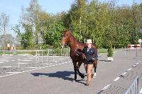 Photo n° 43777KRONENBERG  ambiance vétérinaireAnne Violaine BrisouAffichée 0 fois, 0 voteAjoutée le 19/04/2018 13:03:35 par JeanClaudeGrognet