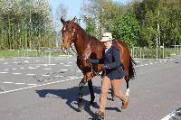 Photo n° 43778KRONENBERG  ambiance vétérinaireAnne Violaine BrisouAffichée 7 fois, 0 voteAjoutée le 19/04/2018 13:03:35 par JeanClaudeGrognet