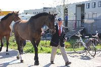 Photo n° 43801KRONENBERG  ambiance vétérinairePierre JungAffichée 4 fois, 0 voteAjoutée le 19/04/2018 13:03:36 par JeanClaudeGrognet