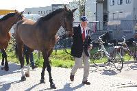 Photo n° 43802KRONENBERG  ambiance vétérinairePierre JungAffichée 5 fois, 0 voteAjoutée le 19/04/2018 13:03:36 par JeanClaudeGrognet