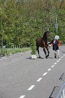 Photo n° 43816KRONENBERG  ambiance vétérinaireAffichée 3 fois, 0 voteAjoutée le 19/04/2018 13:03:36 par JeanClaudeGrognet