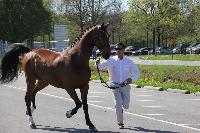 Photo n° 43835KRONENBERG  ambiance vétérinaireMichaël SellierAffichée 1 fois, 0 voteAjoutée le 19/04/2018 13:03:37 par JeanClaudeGrognet