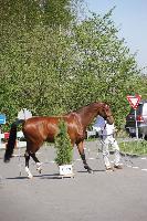 Photo n° 43839KRONENBERG  ambiance vétérinaireMichaël SellierAffichée 0 fois, 0 voteAjoutée le 19/04/2018 13:03:37 par JeanClaudeGrognet
