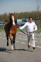 Photo n° 43843KRONENBERG  ambiance vétérinaireMichaël SellierAffichée 7 fois, 1 voteAjoutée le 19/04/2018 13:03:38 par JeanClaudeGrognet