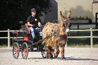 Photo n° 45426Rosières aux Salines 2018Mme Humbert et son âne du PoitouAffichée 2 fois, 1 voteAjoutée le 10/08/2018 12:23:58 par JeanClaudeGrognet--> Cliquer pour agrandir <--