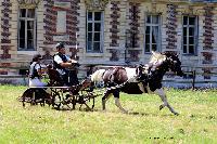 Photo n° 48893 TOURVILLE-LES-IFS 2019. Photo Nadine TOUDIC Thierry AUBE Affichée 2 fois Ajoutée le 27/08/2019 11:44:56 par Nadinetoudic  --> Cliquer pour agrandir <--