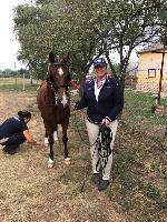 Photo n° 49115 KISBER ASZAR CdM poneys photo Dudule Carine Poentis Affichée 61 fois Ajoutée le 24/09/2019 17:32:28 par JeanClaudeGrognet  --> Cliquer pour agrandir <--
