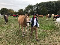 Photo n° 49117 KISBER ASZAR CdM poneys photo Dudule Equipe Rolph Guthmann Affichée 40 fois Ajoutée le 24/09/2019 17:32:28 par JeanClaudeGrognet  --> Cliquer pour agrandir <--