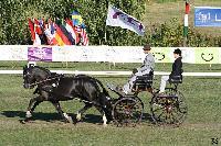 Photo n° 49136 KISBER CdM poneys Jean Frédéric Selle Affichée 17 fois Ajoutée le 27/09/2019 08:30:50 par JeanClaudeGrognet  --> Cliquer pour agrandir <--