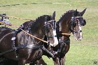 Photo n° 49137 KISBER CdM poneys Les poneys de Jean Frédéric Selle Affichée 21 fois Ajoutée le 27/09/2019 08:30:50 par JeanClaudeGrognet  --> Cliquer pour agrandir <--