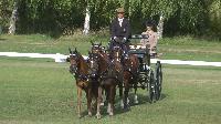 Photo n° 49138 KISBER CdM poneys  Steffen Brauchle (Ger) vainqueur du dressage 4 poneys Affichée 18 fois Ajoutée le 27/09/2019 17:00:03 par JeanClaudeGrognet  --> Cliquer pour agrandir <--