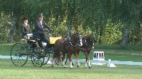 Photo n° 49140 KISBER CdM poneys  Christof Weihe  (Ger) vainqueur du dressage 2 poneys Affichée 21 fois Ajoutée le 27/09/2019 17:00:04 par JeanClaudeGrognet  --> Cliquer pour agrandir <--