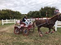 Photo n° 49151 KISBER CdM poneys photo Dudule Claire lefort Affichée 38 fois Ajoutée le 29/09/2019 10:14:50 par JeanClaudeGrognet  --> Cliquer pour agrandir <--