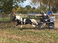 Photo n° 49153 KISBER CdM poneys photo Dudule Anna Chrismann Affichée 53 fois, 4 votes Ajoutée le 29/09/2019 10:14:50 par JeanClaudeGrognet  --> Cliquer pour agrandir <--