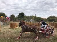 Photo n° 49155 KISBER CdM poneys photo Dudule  Affichée 33 fois Ajoutée le 29/09/2019 10:14:50 par JeanClaudeGrognet  --> Cliquer pour agrandir <--