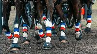 Photo n° 49802 Stage Fédéral 01/ 2020  photo Mélanie Guillamot Thibault Coudry Affichée 10 fois Ajoutée le 21/02/2020 08:47:04 par JeanClaudeGrognet  --> Cliquer pour agrandir <--