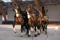 Photo n° 49817 Stage Fédéral 01/ 2020  photo Mélanie Guillamot Thibault Coudry Affichée 2 fois Ajoutée le 21/02/2020 08:47:04 par JeanClaudeGrognet  --> Cliquer pour agrandir <--