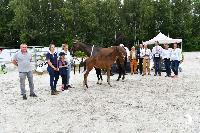 Photo n° 50891  EQWOS concours Interreg foals modèles et allures  Affichée 3 fois, 0 vote Ajoutée le 13/08/2021 08:07:28 par Invité